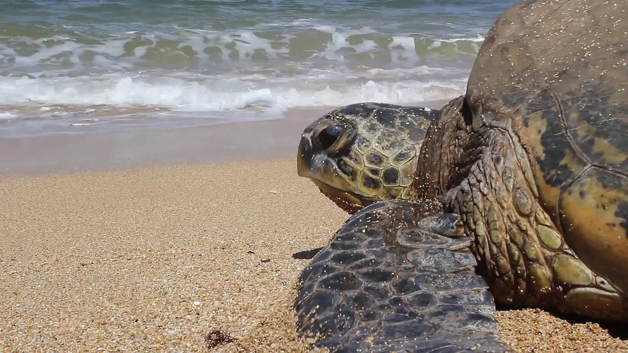 Achtsam in Hawaii